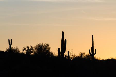 Arizona desert landscape at sunset with saguaro cactus silhouetted photo