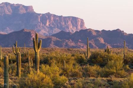 Arizona desert landscape with saguaro cactus in springtime