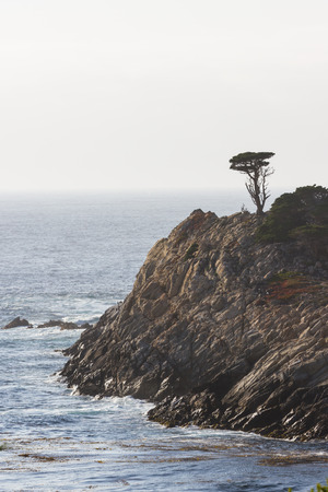 cyprus tree: California coast landscape with a lone cyprus tree standing on a large rock