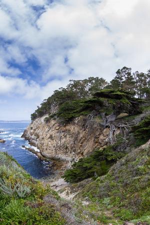 california coast: beautiful cyprus tree in a cliff on the California coast