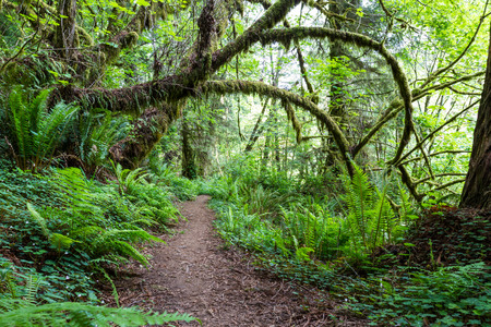 walking trail: walking trail in a green lush forest of northern California