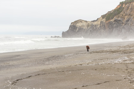 documenting: Trinidad, California - June 17 : woman walking on the beach looking at all the washed up jellyfish, June 17 2015 Trinidad, California.