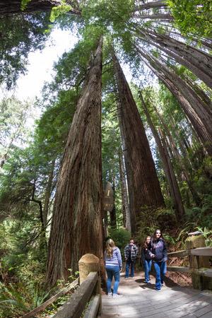 klamath: Klamath, California - June 16 : Family walking thru giant trees at the Trees of Mystery roadside attraction, June 16 2015 Klamath, California. Editorial