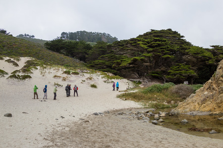 Pfeiffer Beach, California - May 01 : Group of tourists walking on the beach trail lined with giant cyprus trees, May 01 2015 Pfeiffer beach, California.