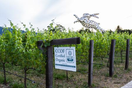 argent: Napa Valley, California - May 12 : Hall Wines, Certified Organic vineyard with Bunny foo Foo in the background, May 12 2015 Napa Valley, California.