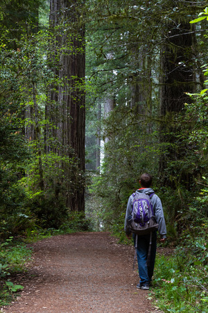 thru: man walking thru a prehistoric looking forest with giant redwood trees