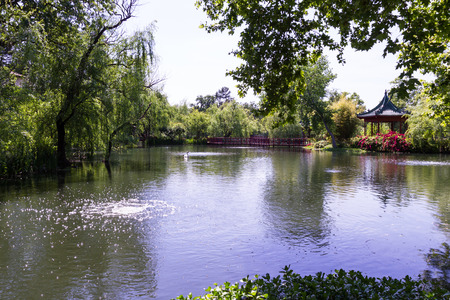 back yard pond: tranquil pond in a luxurious back yard with lush vegetation Stock Photo
