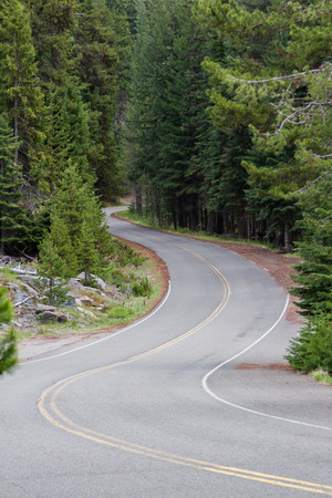 dinky: dinky road thru a lush forest in south central Oregon