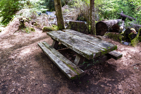 face lift: old picnic bench in the woods of Oregon in need of a face lift.