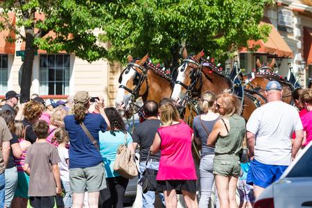 coeur: Coeur d Alene, Idaho - June 12 : Budweiser Clydesdales parade down Sherman avenue attracting large crowds of people, June 12 2015 in Coeur d Alene, Idaho Editorial