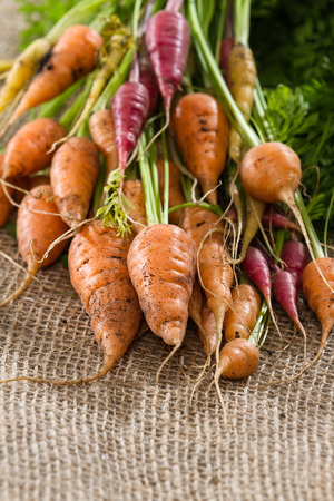 sac: close up of a bunch of freshly picked carrots on a burlap sac Stock Photo