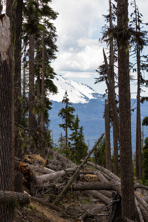 toppled: landscape with trees toppled over in a national park in southern Oregon where strong winds are changing the landscape Stock Photo