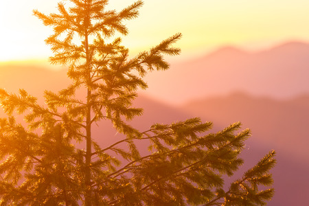 settling: close up of a Douglas Fir tree on top of a mountain in Oregon with wildfire smoke settling into the valleys and and orange and purple glow from the sun setting in the background