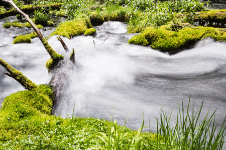 pristine: close up of a pristine spring flowing thru the woods in Oregon