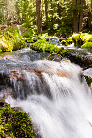 fluoride: close up of a pristine spring flowing thru the woods in Oregon