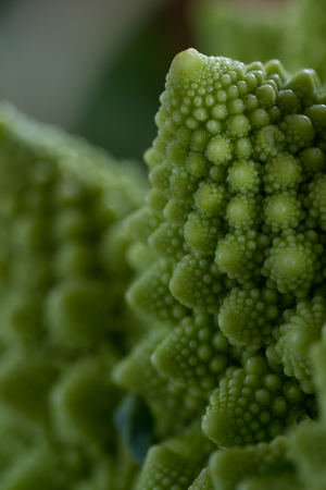 close up with attention to the detail in the texture of a romanesco broccoli with a sort of a fractal or pattern Banco de Imagens