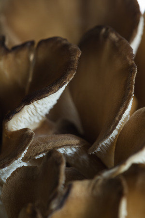 fungi: close up of the texture of a raw brown mistake mushroom Stock Photo