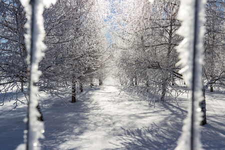 deep freeze: beautiful cold wintery scene with dozen trees shot thru a frozen fence with large shards of ice