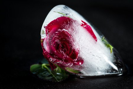 close up of a small red rose frozen in an ice cube adding beautiful lines and bubbles using element of distortion with artistic intention