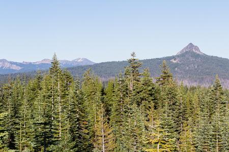 バック グラウンドで連合のピークとオレゴン州南部の鬱蒼とした森のビュー