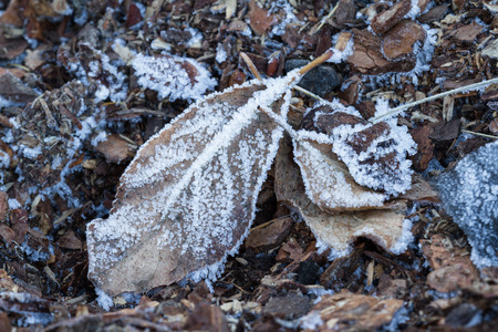 affecting: macro of a frozen autumn leaf early winter with ice adding to the natural pattern of the leaf