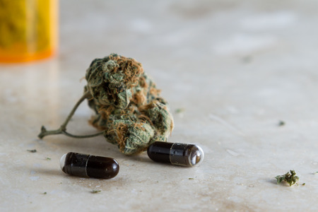 ingestion: close up of a small capsule filled with a dark oil produced from the hemp plant as a medicinal marijuana concept