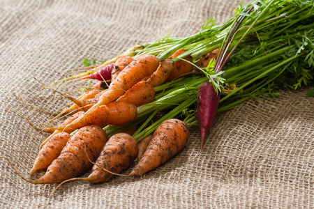 burlap sac: close up of a bunch of freshly picked carrots on a burlap sac Stock Photo