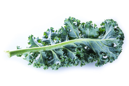 sourced: close up of a leaf of fresh organic kale on a white background