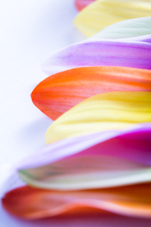 multi colorful: macro of multiple petals from multi colorful aster flowers