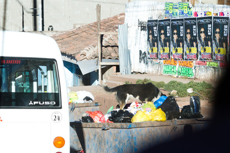 dumpster: Cusco Peru -May 18 : Dog diving into a dumpster looking for something to eat. May 18 2016, Cusco Peru.