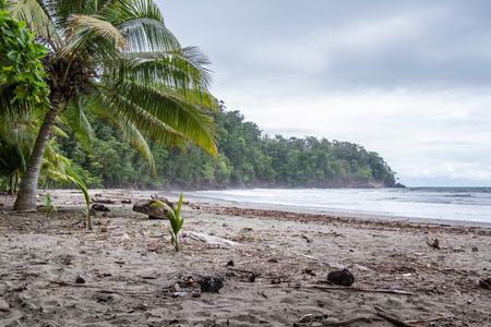 turismo ecologico: relajantes en la playa en la Costa Rica del sur del Pacífico