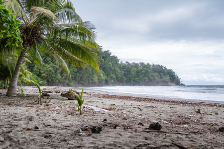 relaxing beach in the Costa Rican south pacific