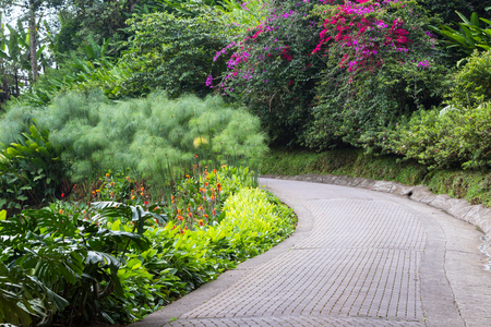 thru: scene with a paved path thru a tropical garden with beautiful colorful flowers and vivid plants