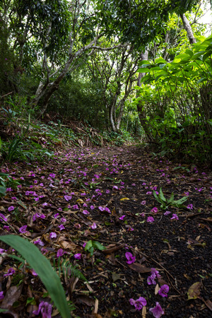 thru: low angle view of a dirty path covered in purple flowers thru the rain forest