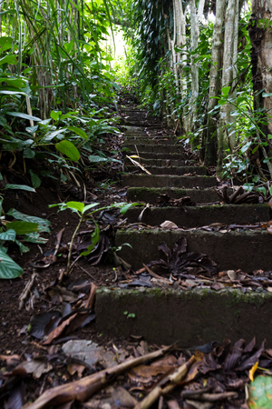 climbing steps in the rain forest covered with decomposing leaved and green plants