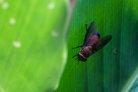close up of a large horse fly on a palm leaf in the Rain Forest of Costa Rica