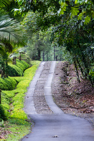 beautiful driveway lines with abundant vegetation In San Carlos, Costa Rica
