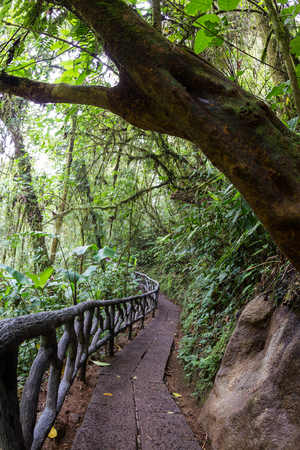 well maintained: well maintained path in a tropical rain forest in central Costa Ruca
