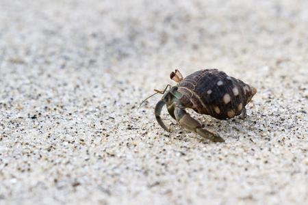 hermit crab on a sandy beach