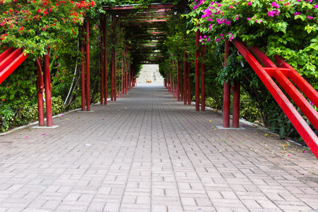 viejo: Panama City, Panama: A green natural tunnel entering the old part of Town, Casco Viejo.