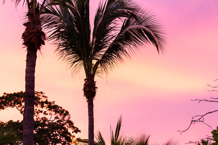 tight shot of palm trees with a beautiful colorful and glowing sky in the background Stock Photo