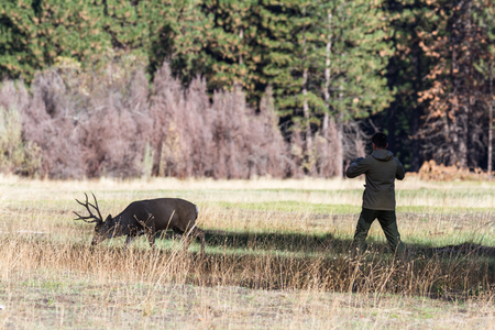 Yosemite NP, California - November 17: Buck with a nice rack walking in front of a photographer in the Yosemite Valley. November 17 2016, Yosemite NP, California. Editorial