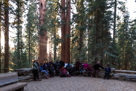 spongy: Sequoia NP, California - November 14: Large family posing for a picture on the backside of General Sherman. November 14 2016, Sequoia NP, California.