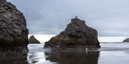 slow motion: Classic coastal view in Oregon with large rocks in the sand and clouds and fog in the sky creating a dramatic tranquil effect using a slow shutter speed to blend in the waves and a still sea gull on top of a rock