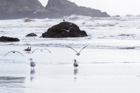 peaceful scene in southern Oregon with clouds and fog anda group of sea gulls walking on the beach