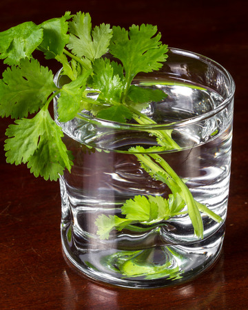 close up of some cilantro leaves in a glass of water served on a dark wooden table