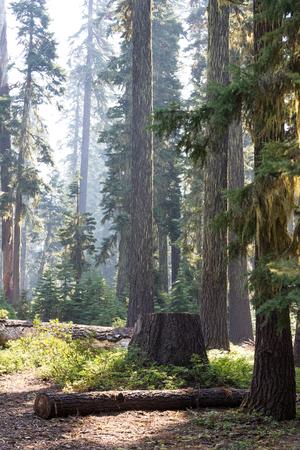 晩夏 2017 米国の西海岸、空気のオレゴン州の山の中でここに見られるように煙がたくさんがあった。 写真素材