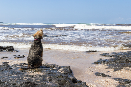 upset dog sitting on the rocks at the edge of the water waiting for his person to come back from surfing
