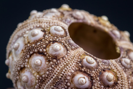 beautiful intricate design with an amazing complex pattern found on a small sea shell