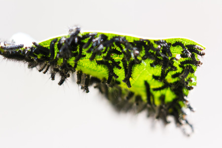 close up of a cluster of small black caterpillars on a tropical, plant